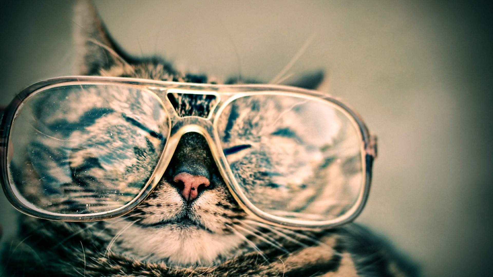 make church cool cat with glasses