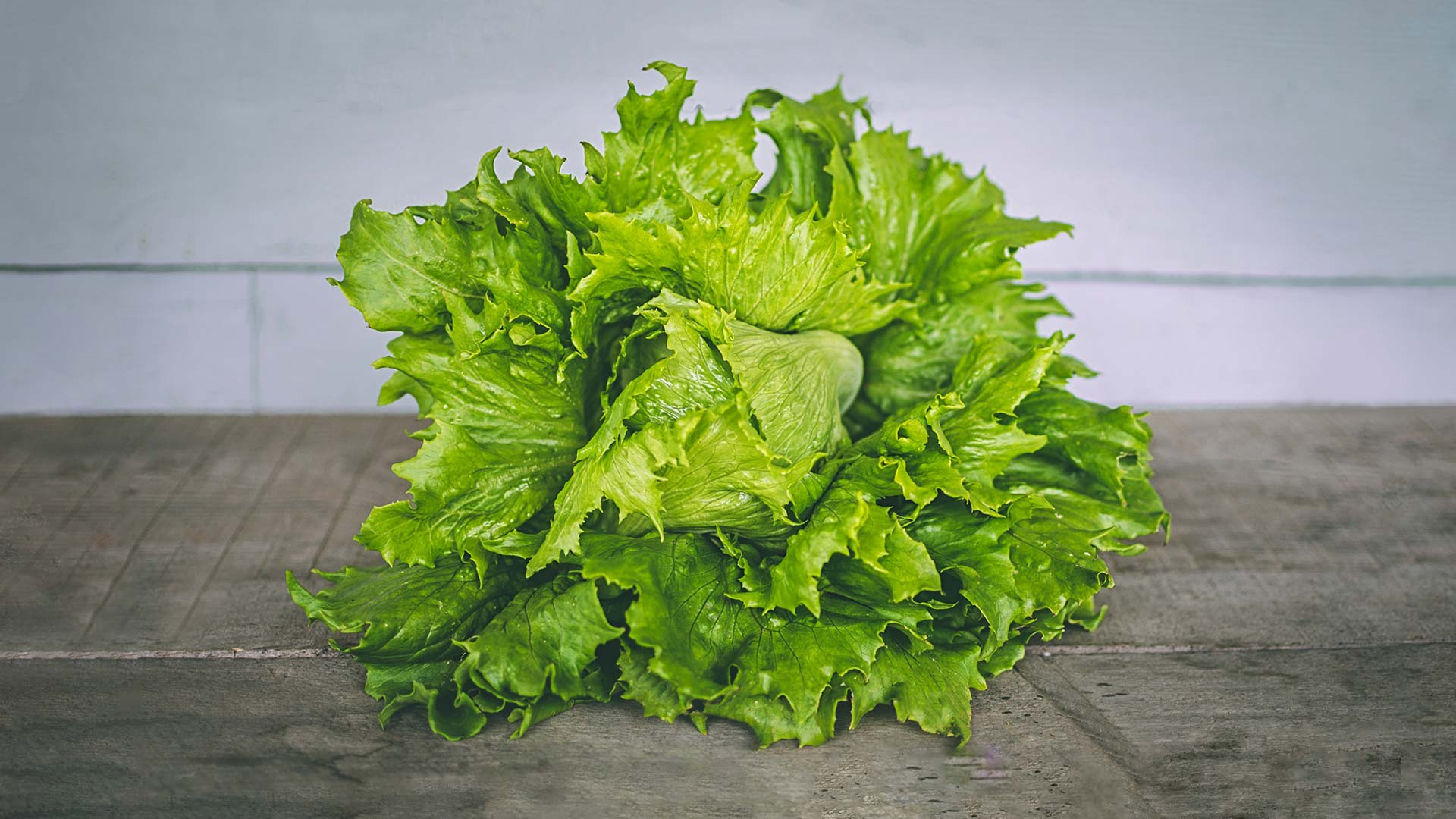 head of lettuce from salinas